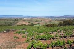 7. View from Alto de San Anton