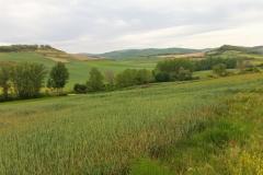 7. near Viloria de Rioja