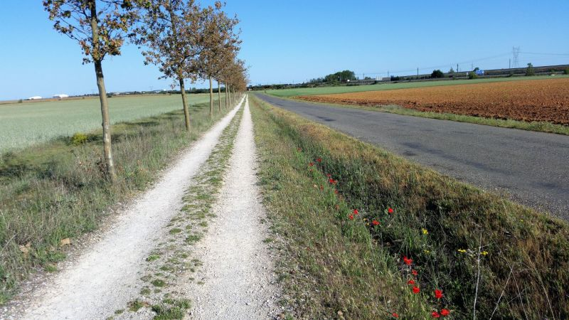 16.Senda-Bercianos-del-Real-Camino-4