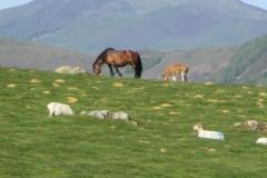 8. Ponies Near col d elhursaro