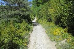 8. Linzoain to Alto de Erro (3)