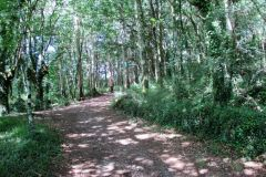 6.-Omn-the-way-to-Negreira
