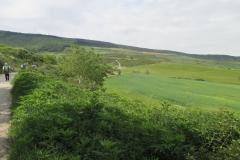 10. Zariquiegui to Alto de Perdon