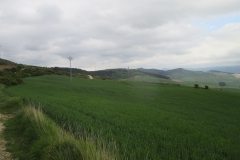 12. Zariquiegui to Alto de Perdon (3)